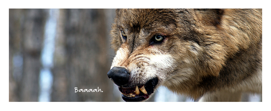 скачать музыку про волчицу